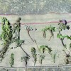 peru-andes-P-ANDES-29 Plants on Andes blanket